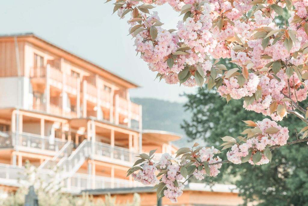 Bäume mit Blüten mit Hotel