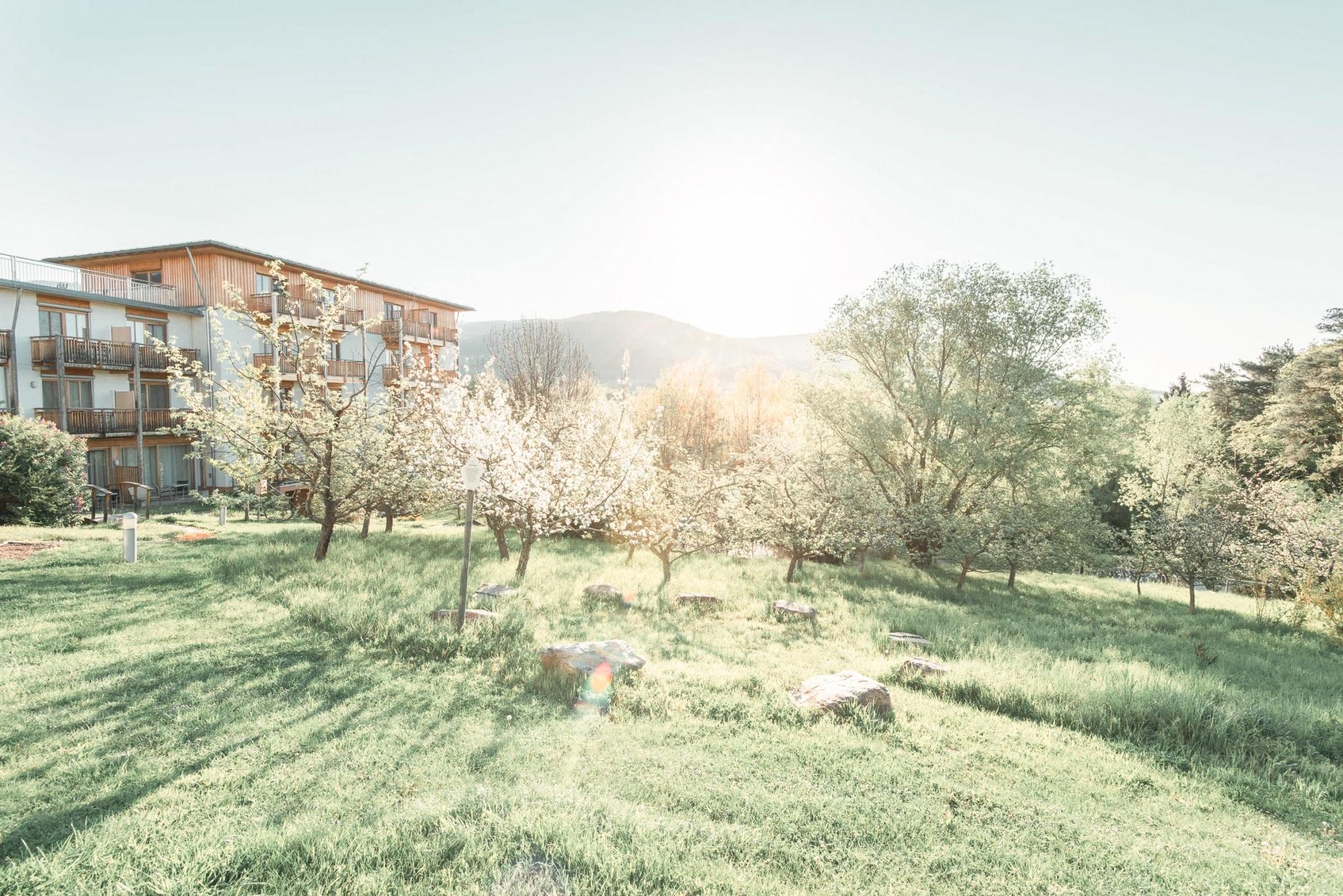 Bäume mit Blüten Hotel Retter