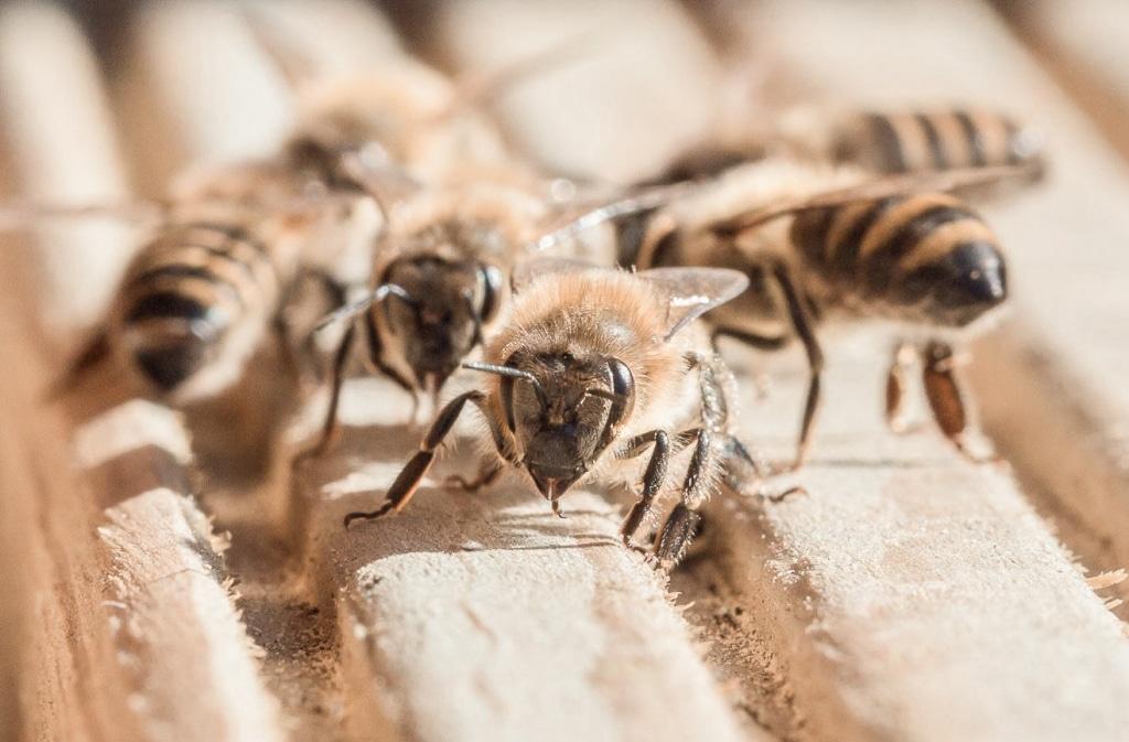 Bienen beim Bienenhaltung Workshop im Retter BioGut