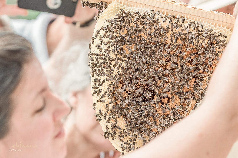 Bienen auf Bienenwaben im Retter BioGut