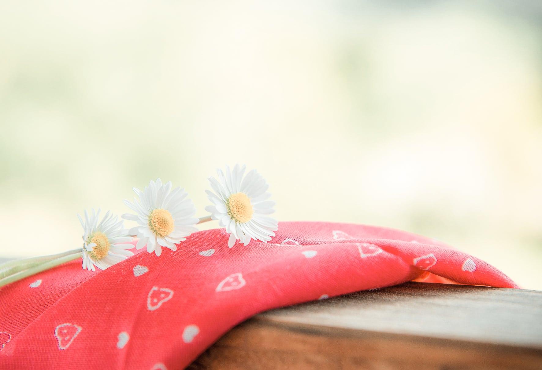 Gänseblümchen Biohotel Retter