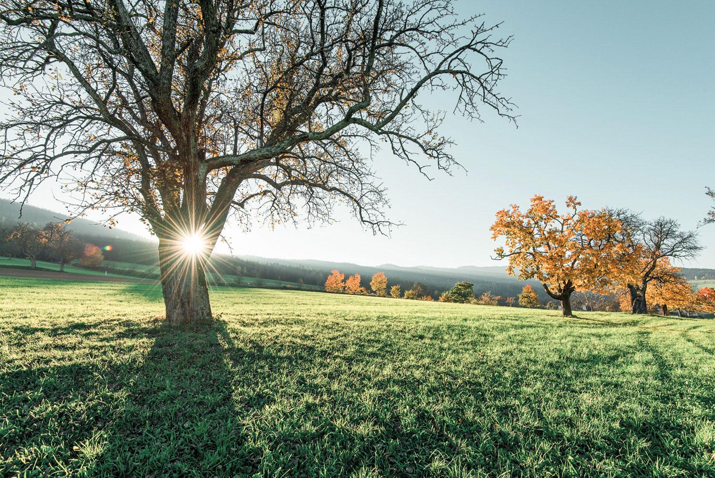Herbst Sonnenaufgang Natur Biohotel Retter