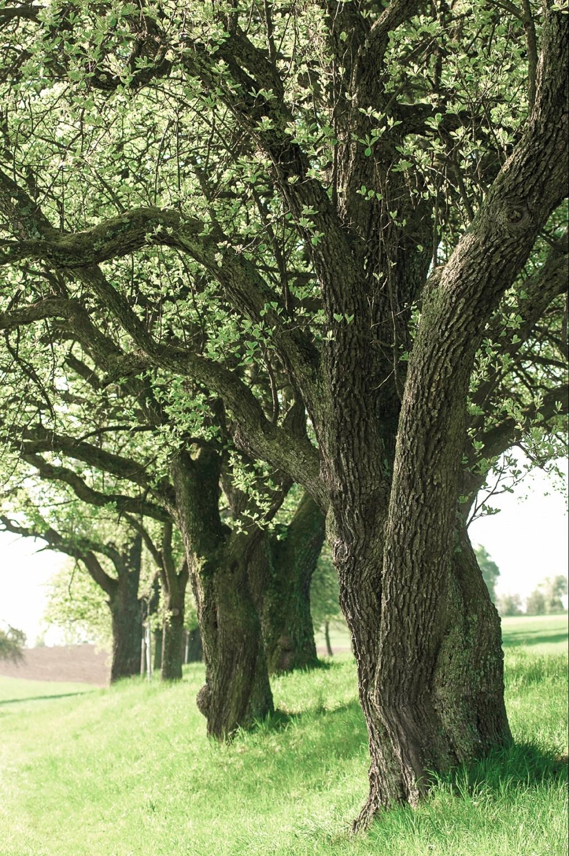 Hirschbirnbaumallee Ausflugsziel vom Biohotel Retter