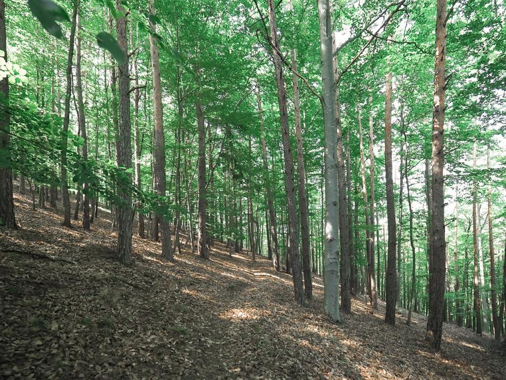 Wald im Naturpark Pöllauer Tal