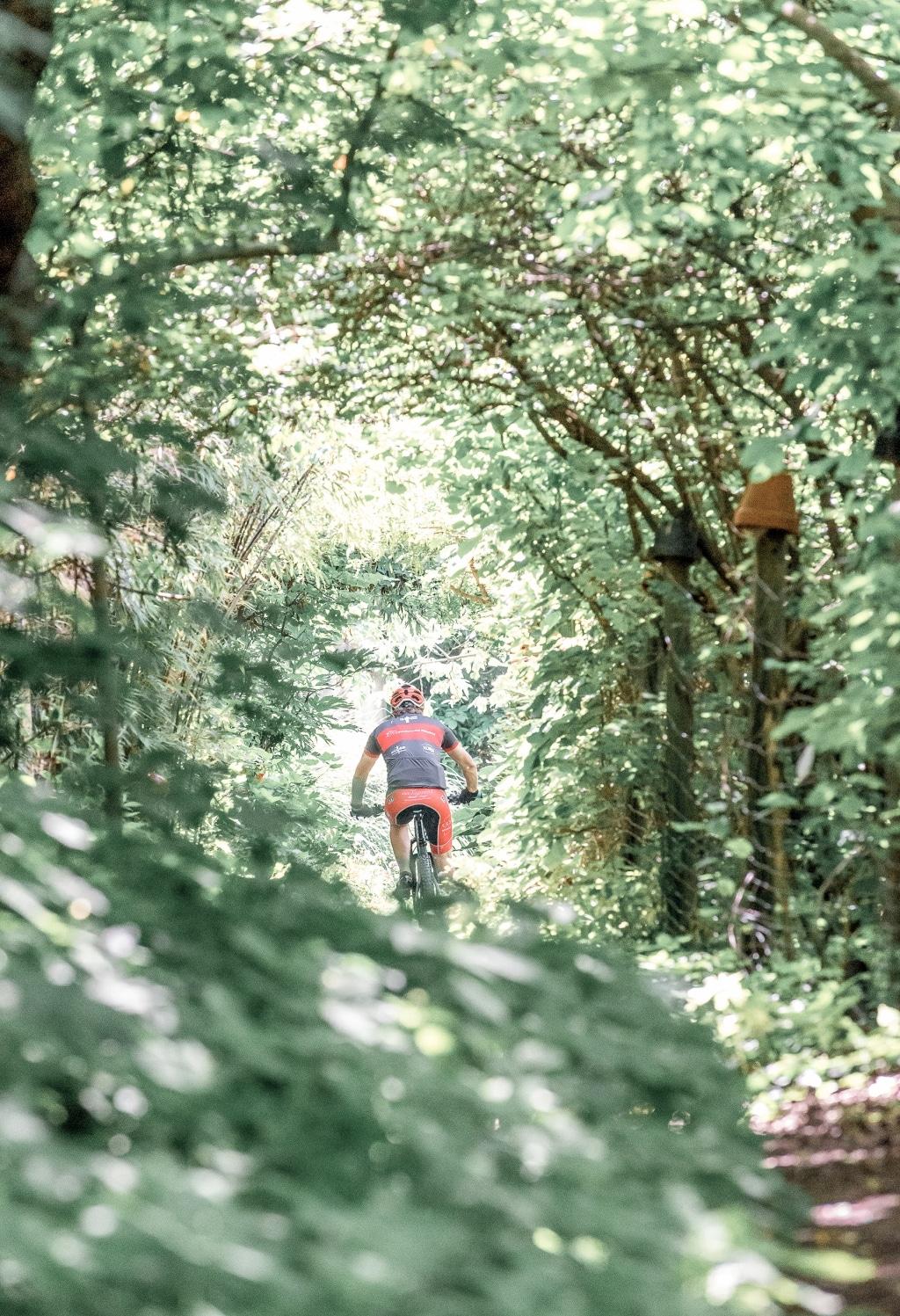 Radfahrer im Wald rund um den Pöllauberg