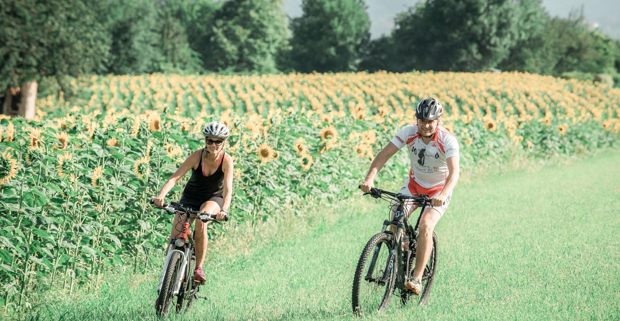 Rad und E-Bike vor Sonnenblumenwiese