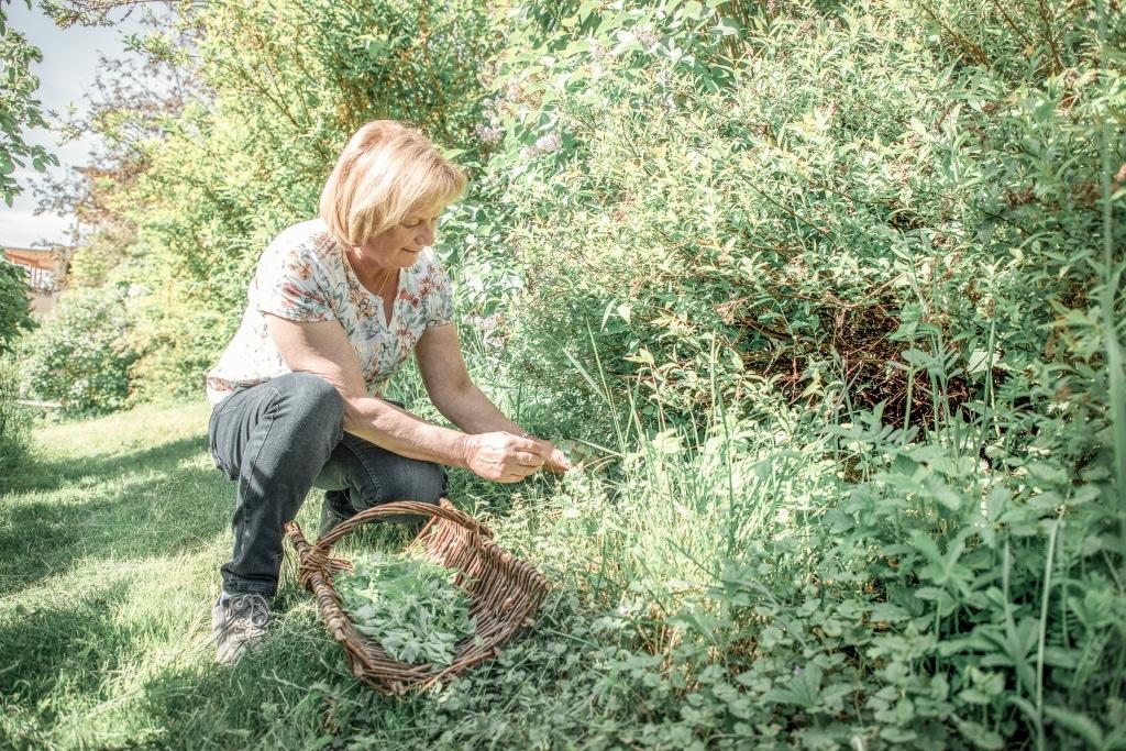 Unsere Garten und Kräuterexpertin Roswitha Ebner beim Kräutersammeln im Biohotel Retter
