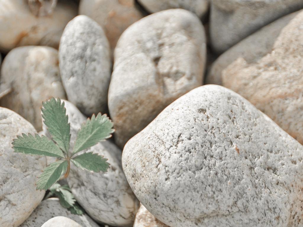 Steine im Wellnessbereich vom Biohotel Retter
