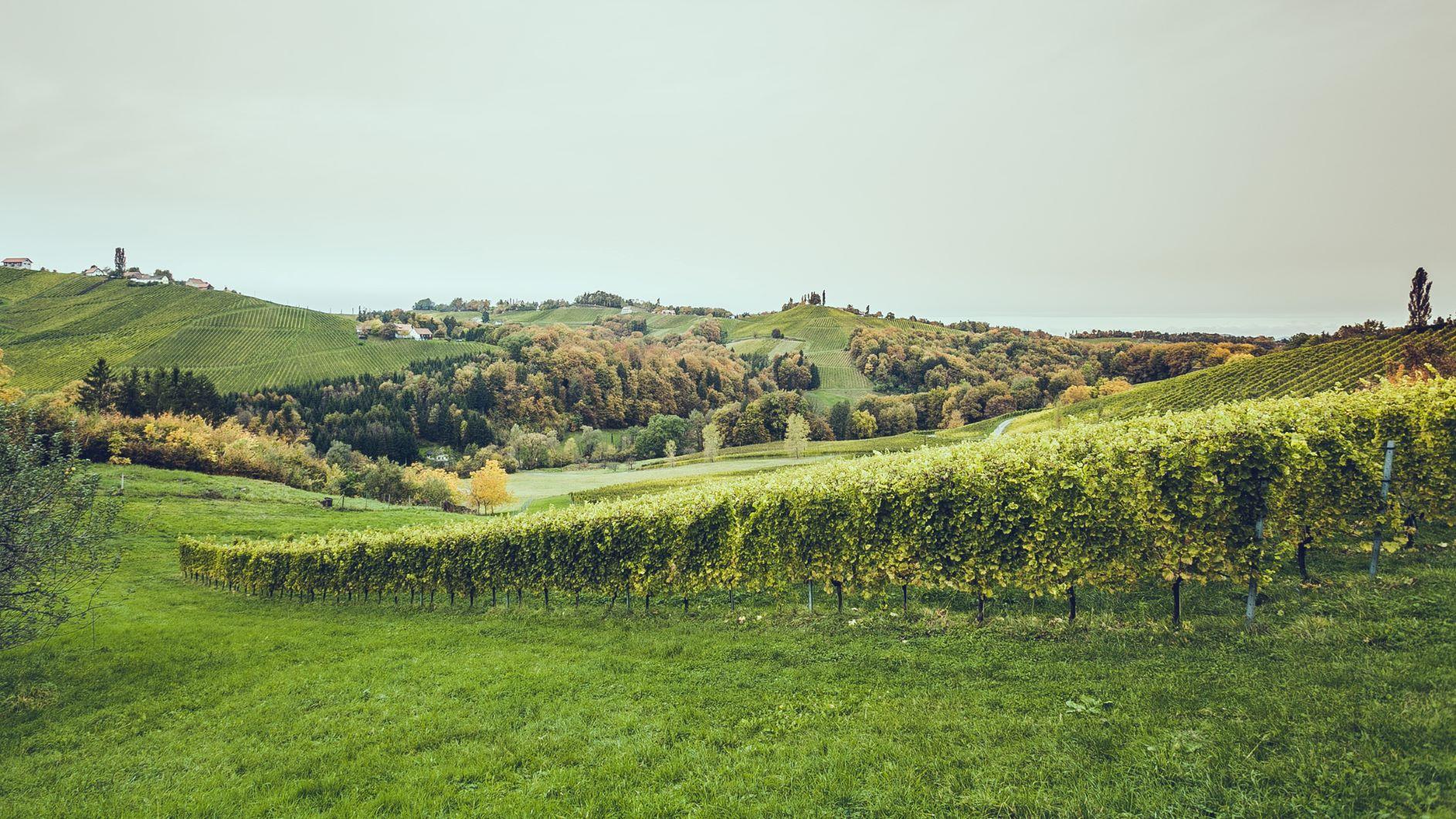 Lieferant Bioweingut Lackner-Tinnacher Landschaft
