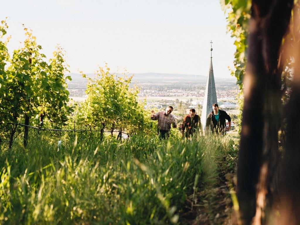 Lieferant Bio-Weingut Reinisch Landschaft