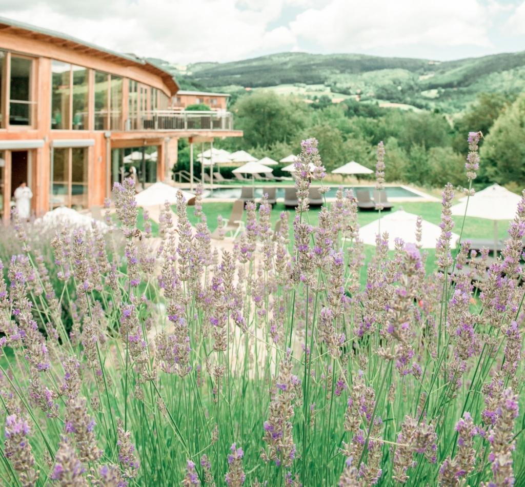 Lavendelbeet mit Wellnessbereich im Hintergrund im Biohotel Retter