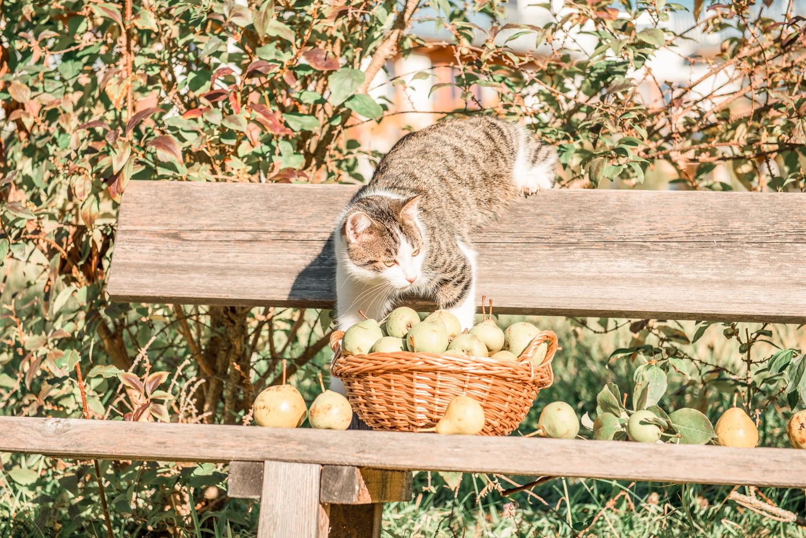 Hauskater Moritz erkundet unseren Streuobstgarten