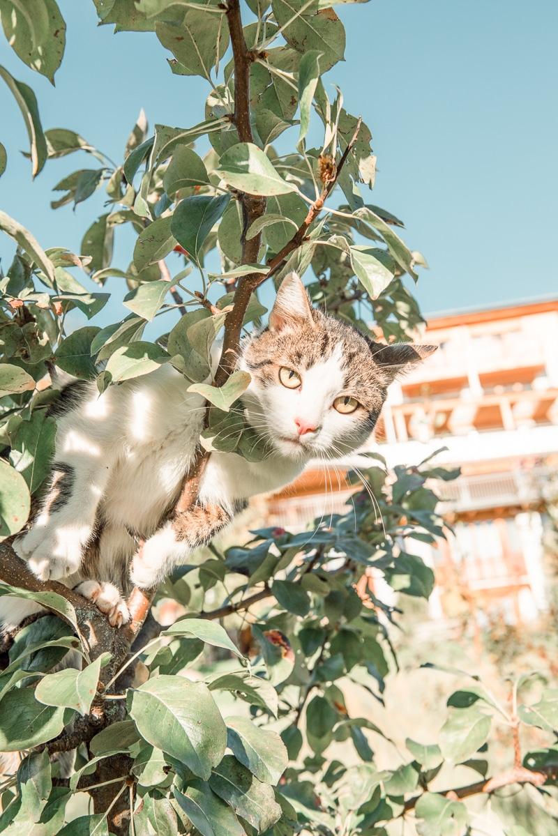 Unser Hauskater Moritz klettert gerne auf unsere Hirschbirnbäume
